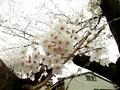 [Flower][花]