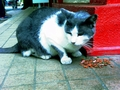[enoshima][江ノ島][猫][江ノ島&鎌倉散策2008夏]