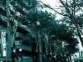 [tokyo][shibuya][christmas][東京][渋谷][クリスマス]