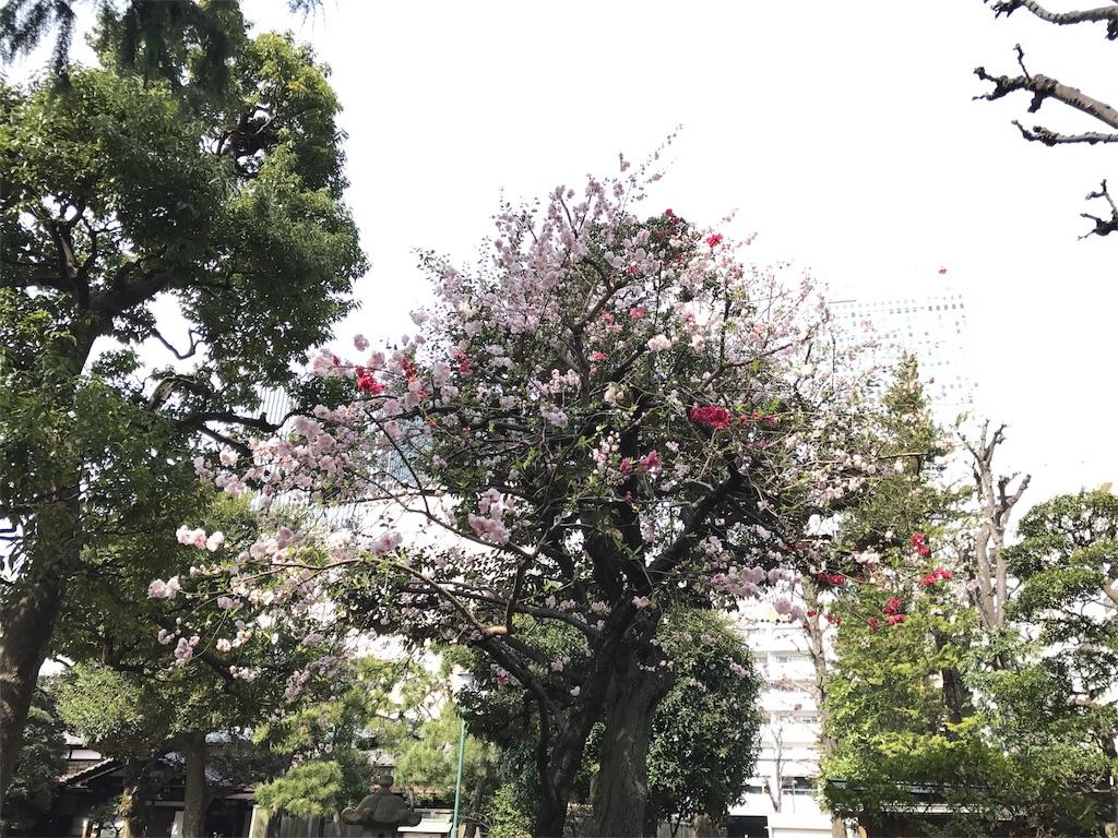 f:id:enjoyhima:20170411010836j:image