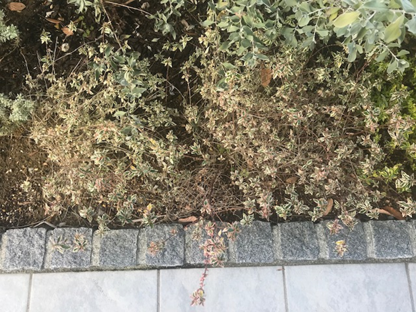 f:id:enoshima07:20191228165116p:plain