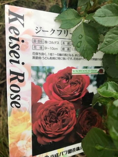 f:id:enoshima07:20200416130949j:plain