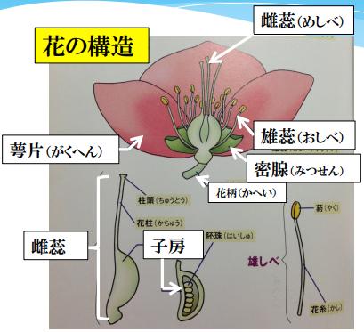f:id:enoshima07:20200423142449p:plain