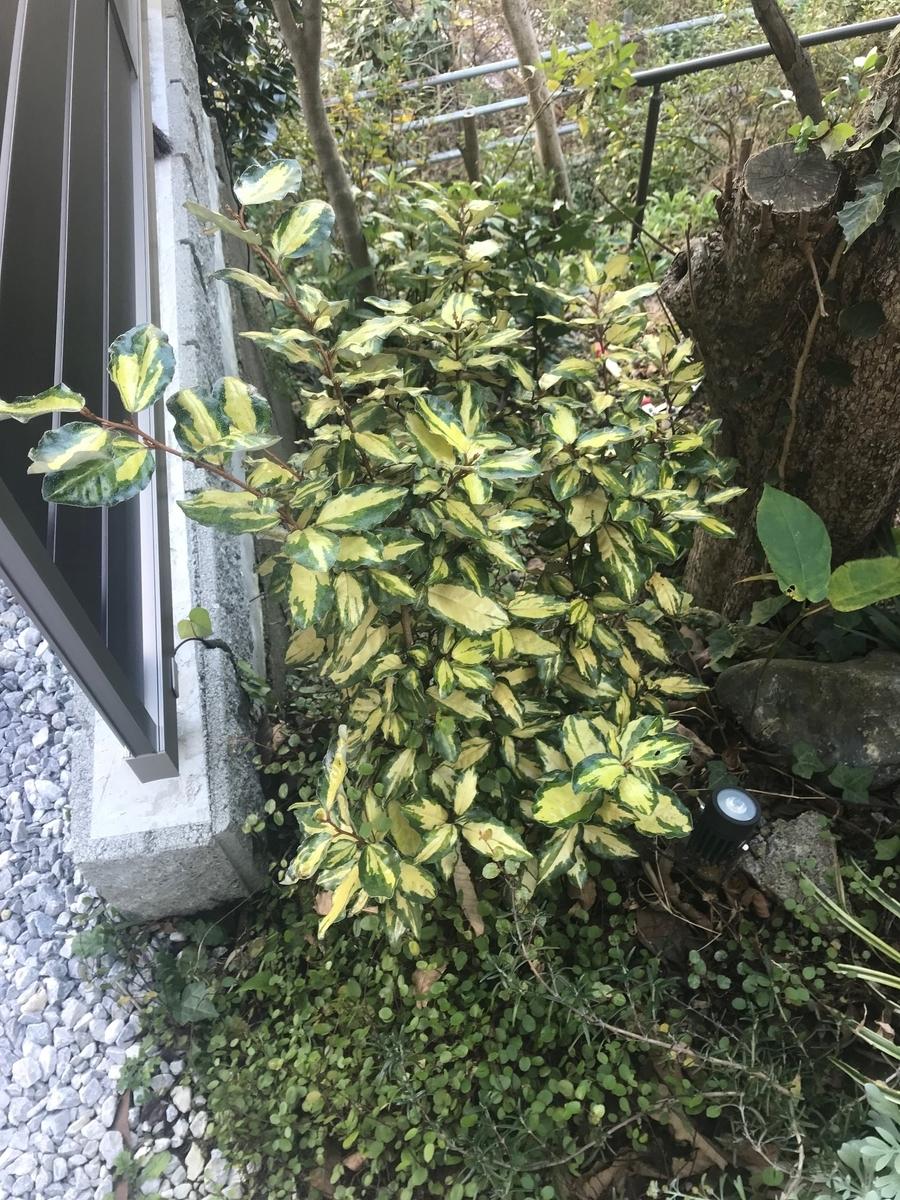 f:id:enoshima07:20201121080606j:plain