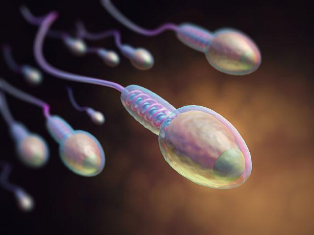 精子の質の向上に運動は効果的か? 精子の質を調査