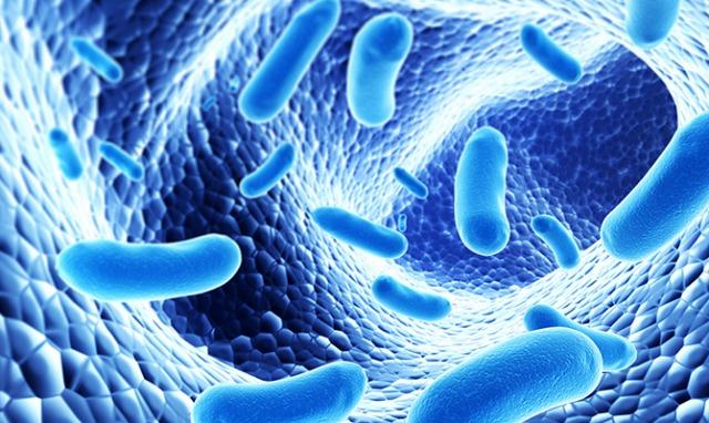 抗生物質はアルツハイマー病の原因を遠ざける?腸内細菌と「アミロイド斑」に関係を確認