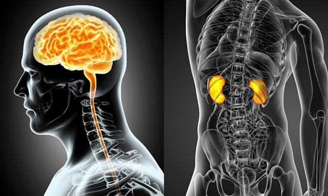 尿中のたんぱく質と認知症は関連あり?脳と腎臓の機能はリスク要因が同じ