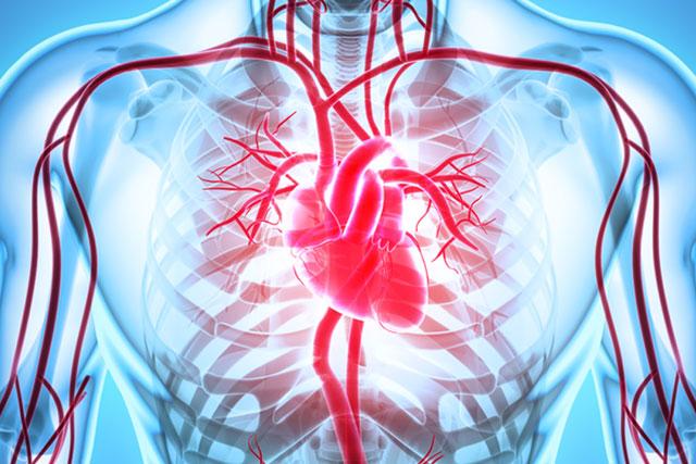 なぜ心臓内に血液が充満するのか?「液圧力」に注目すると、心不全の新治療へ