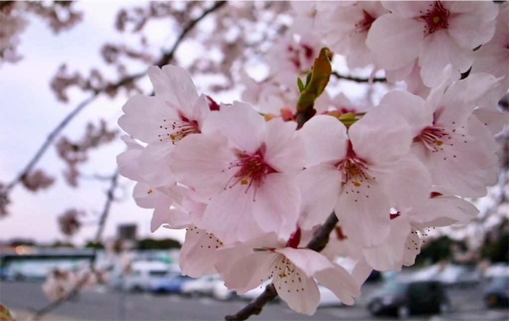 f:id:epinkflower:20180114203952j:image