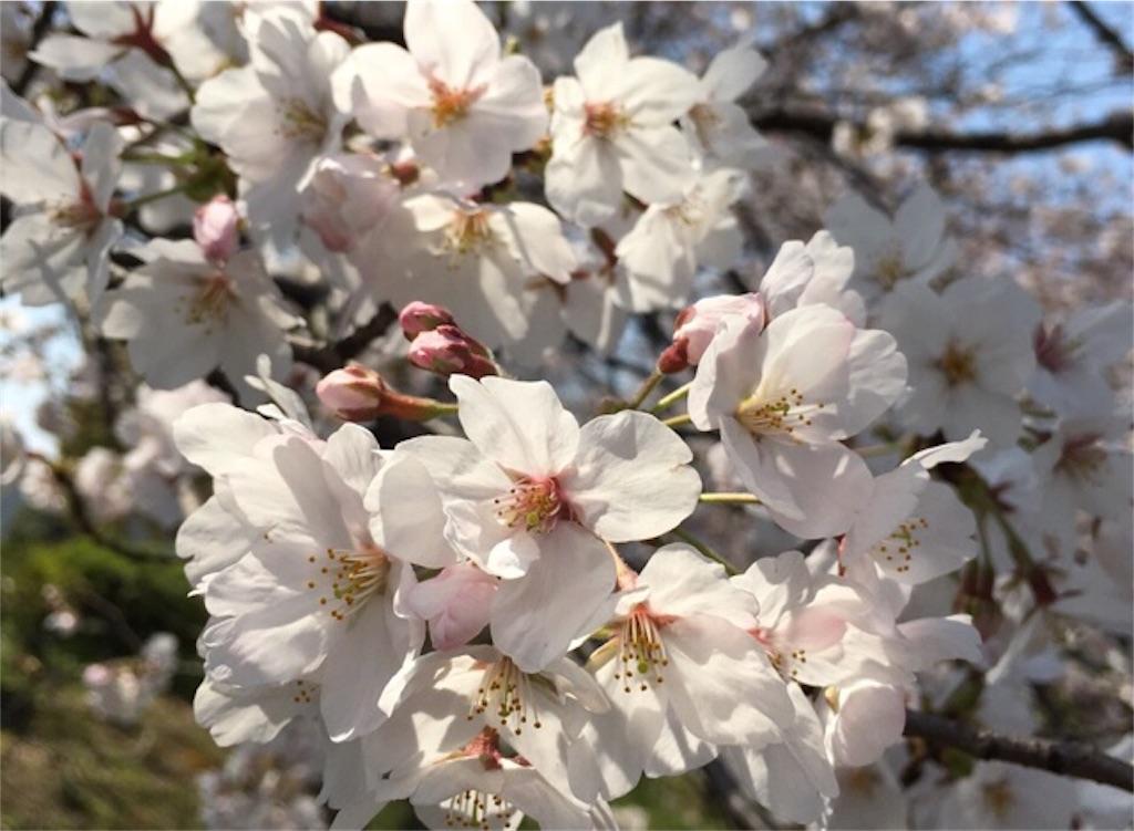 f:id:epinkflower:20180115224337j:image
