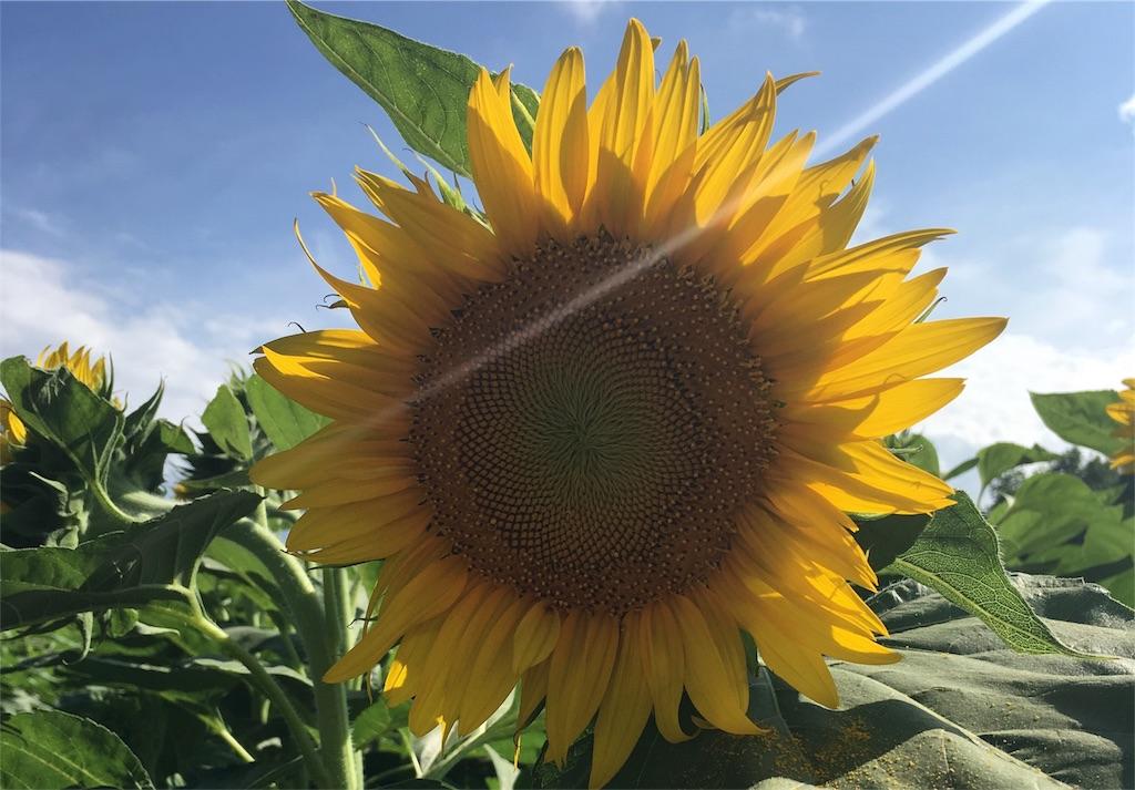 f:id:epinkflower:20180126050824j:image