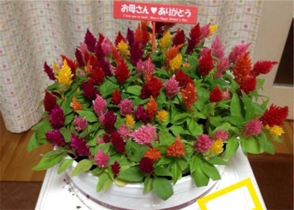 f:id:epinkflower:20180408164224j:image