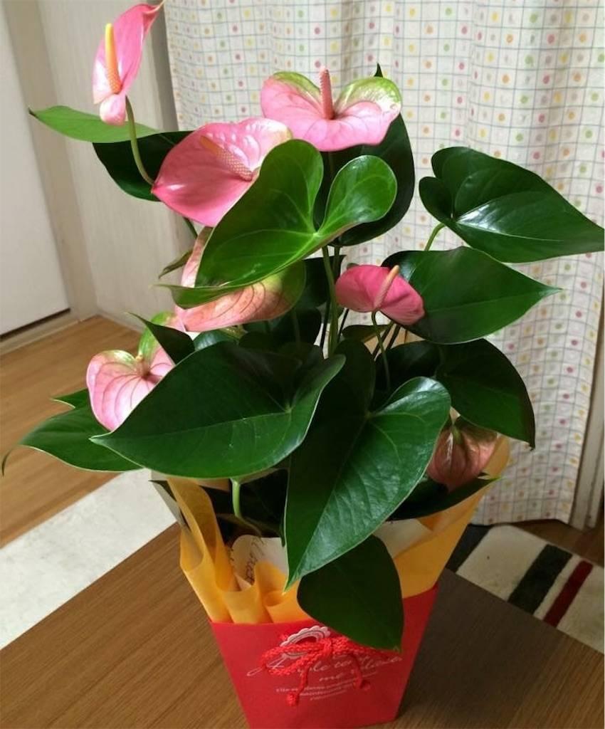f:id:epinkflower:20180408164342j:image