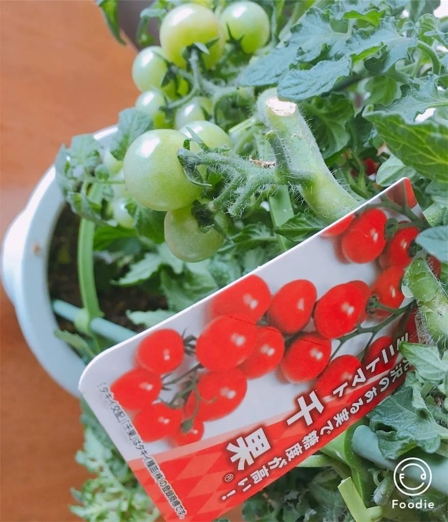 f:id:epinkflower:20180504090156j:image