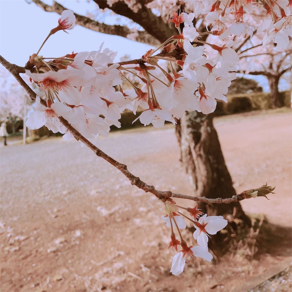 f:id:eri-imamachi:20180421174006j:image