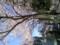 靖国神社の桜は8分咲き〜満開って感じ。週末まで持つかな?