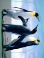 ♦ペンギン♦