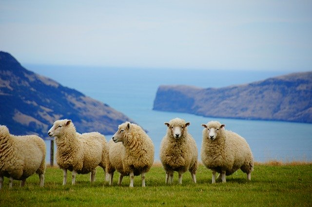 Do you know how local people in New Zealand say NO?