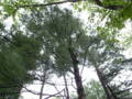 [Place]外国樹種見本林◇3