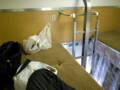 [train]富士開放型B寝台上段