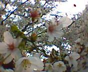 2007-04-06_14-50.jpg