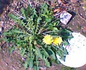 2007-03-29_14-12.jpg