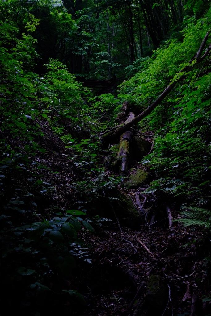 f:id:eucalyptus_gunnii:20180601145415j:image