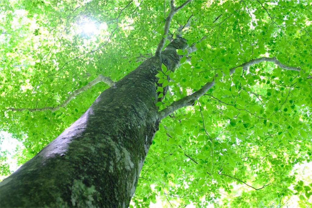 f:id:eucalyptus_gunnii:20180601150510j:image