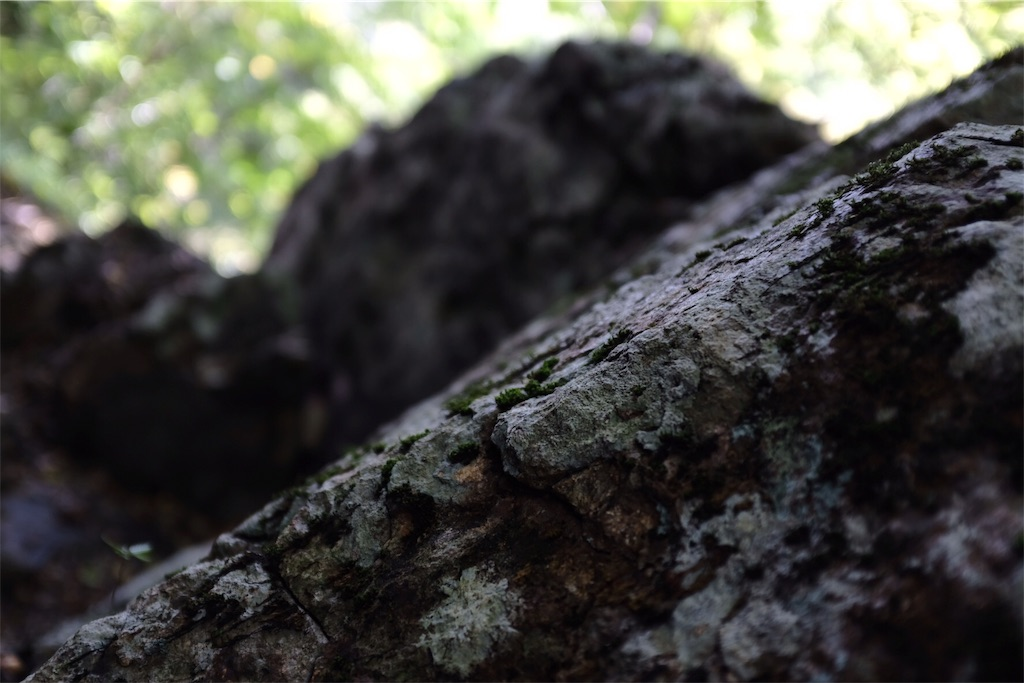 f:id:eucalyptus_gunnii:20180918201549j:image