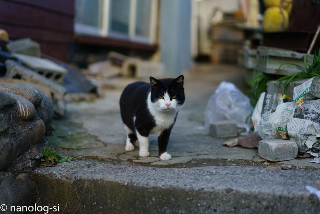 田代島 猫 白黒