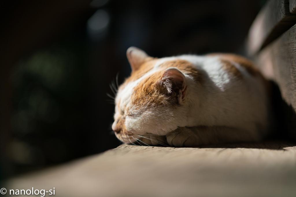 護国寺 猫 伏せ寝