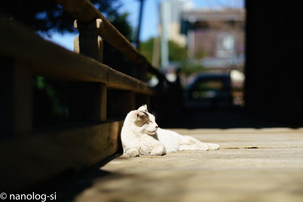 護国寺 猫 手すり