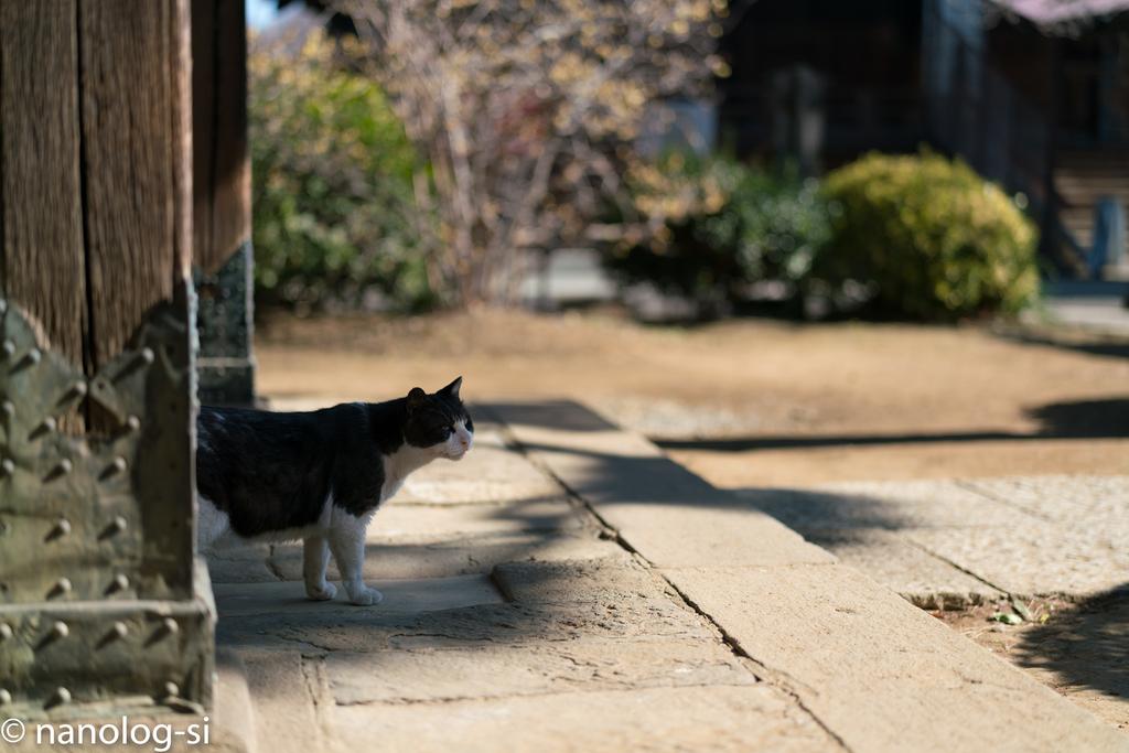 護国寺 猫 白黒