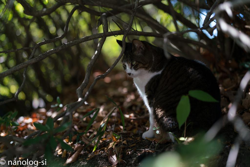 護国寺 猫 藪