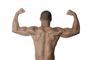 ミドリムシが筋肉に効く