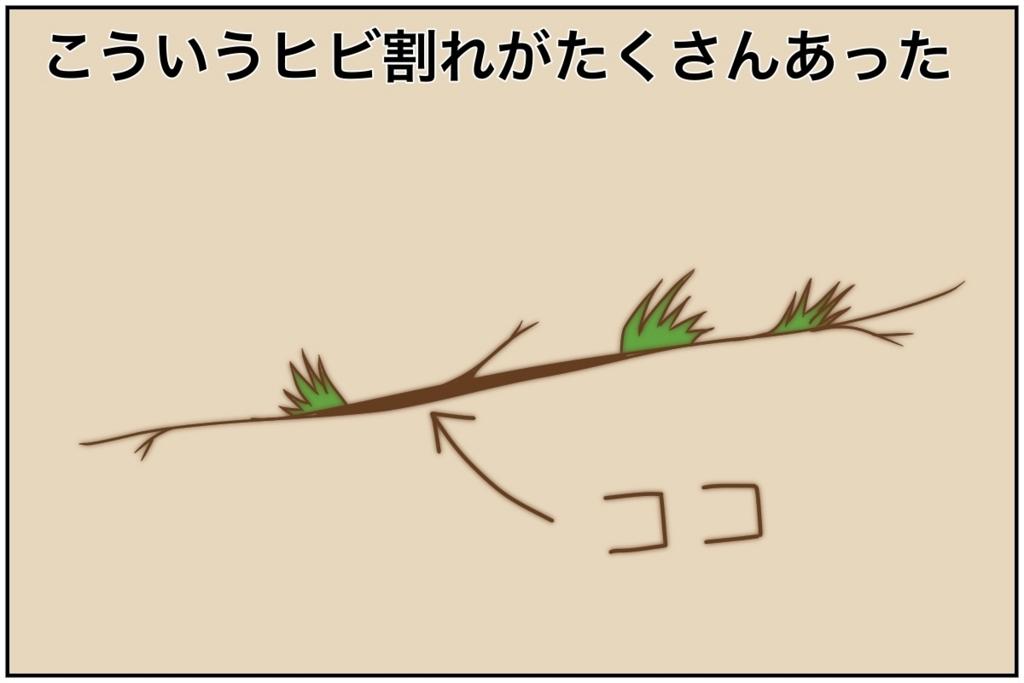 f:id:euri-kusanagi:20170711202905j:plain