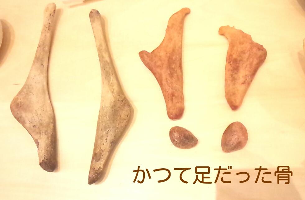 f:id:euri-kusanagi:20171108130152j:plain