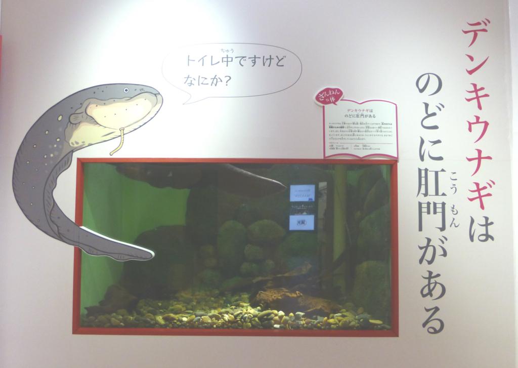 f:id:euri-kusanagi:20171120091016j:plain