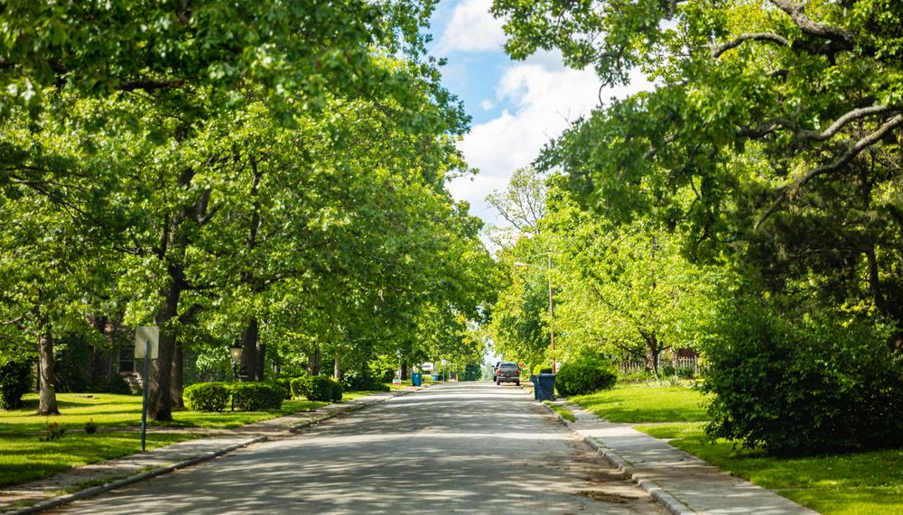 緑豊かな街道