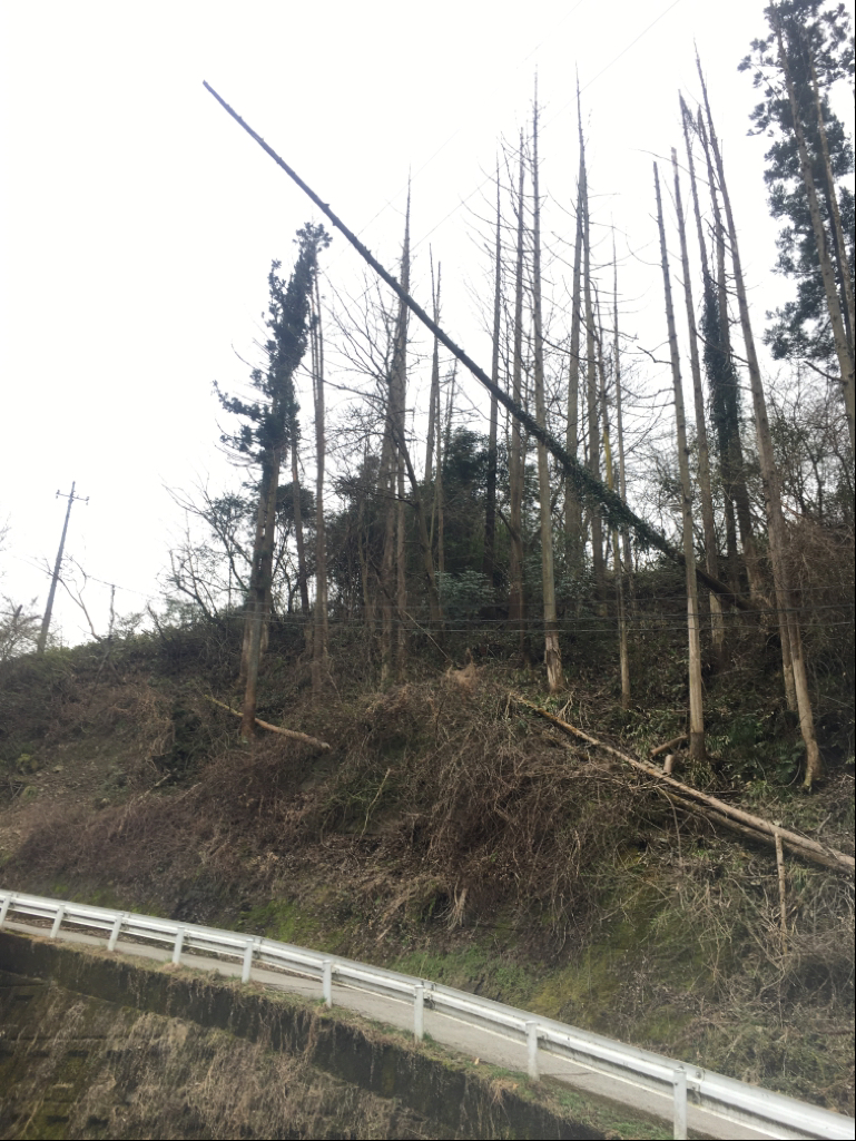 倒木が電線に引っかかっている様子