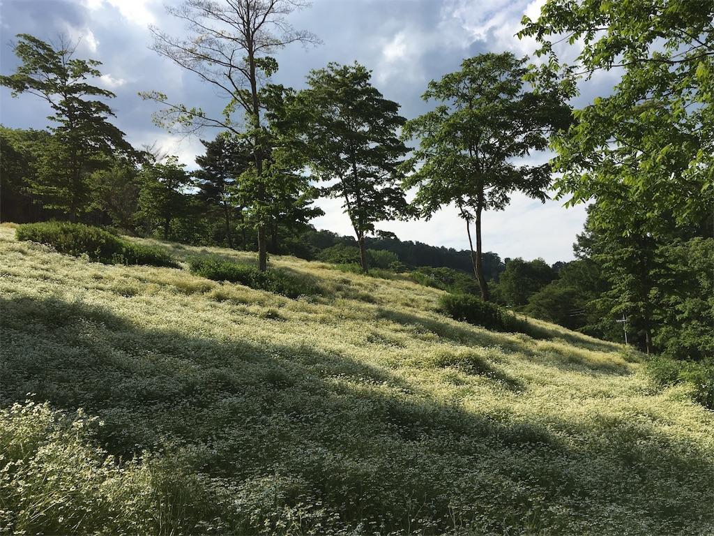 f:id:evergreen114:20170329001852j:image