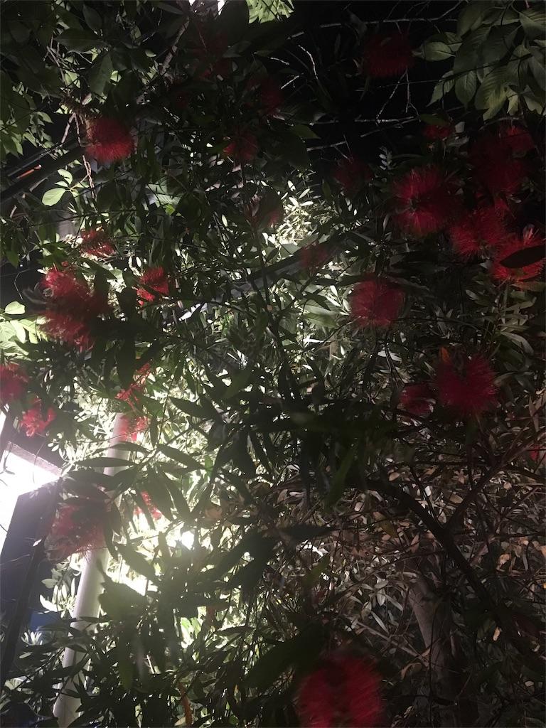 f:id:evergreen114:20170520234424j:image