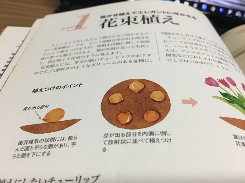 の 方 チュウリップ 植え チューリップの育て方|球根の植え方や時期、水やり、肥料のコツは?