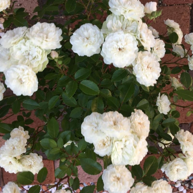 f:id:evergreen_flower:20180520143105j:plain