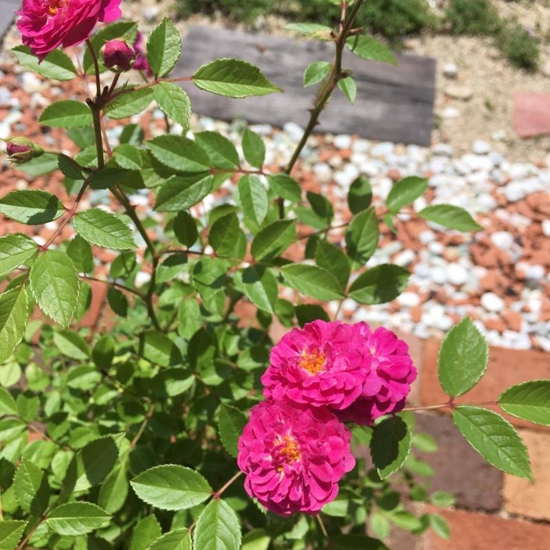 f:id:evergreen_flower:20180520143406j:plain