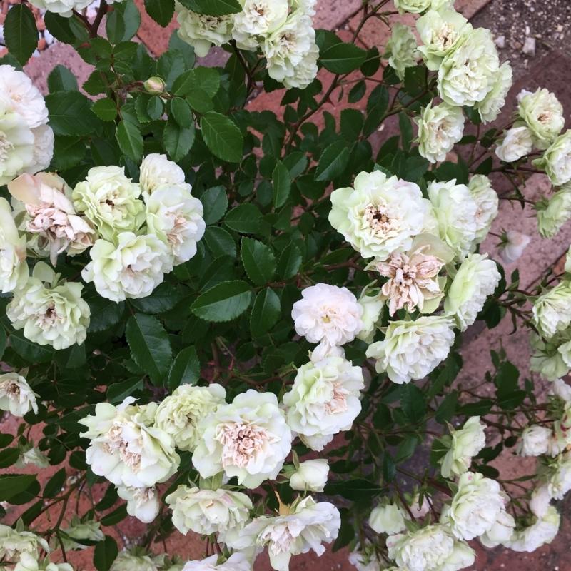 f:id:evergreen_flower:20180528193512j:plain