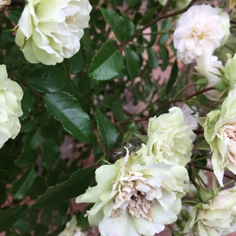 f:id:evergreen_flower:20180528193521j:plain