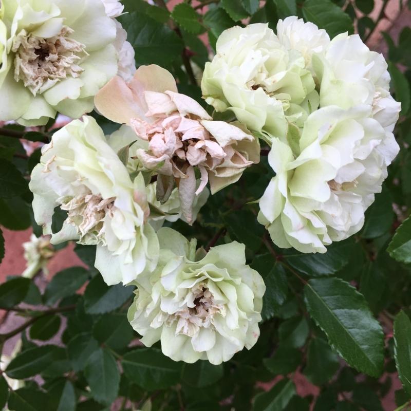 f:id:evergreen_flower:20180528193533j:plain