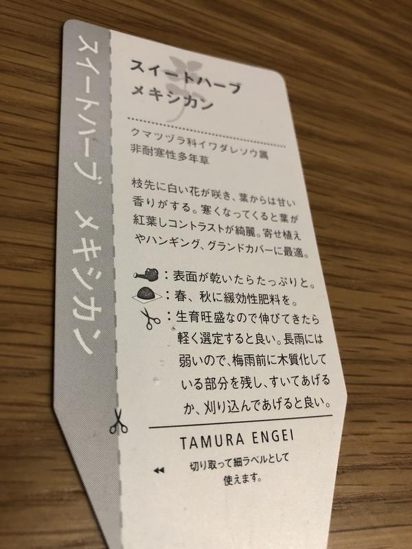f:id:evergreen_flower:20180915112806j:plain