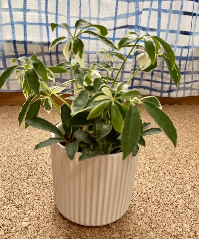 スリーコインズ 植木鉢